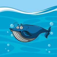 Blauwe vinvis met duizelig gezicht in de zee