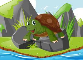 Cute turtle standing on rocks