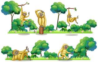 Gibbons viviendo en el bosque