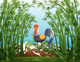 A rooster in the bamboo forest