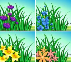 Four scenes of flowers and grass