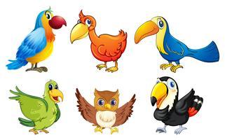 Six oiseaux en vol