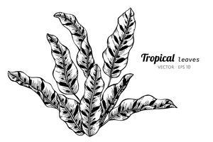 Jogo da coleção das folhas tropicais que desenham a ilustração.
