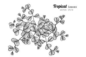 Tropical leaves drawing illustration. vector