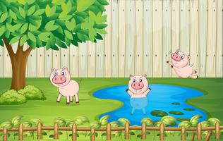 Porcs dans la cour