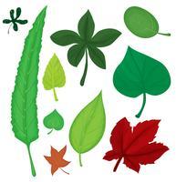 Blätter gesetzt