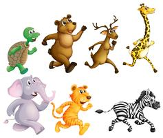 Wild animals running on white background