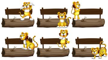 Wooden signs with tigers