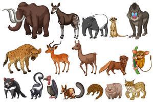 Animales raros vector