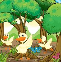 Three white ducks in the middle of the woods