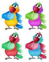 Quatro papagaios coloridos