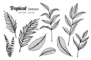 Ensemble de collection de feuilles tropicales, dessin d'illustration.