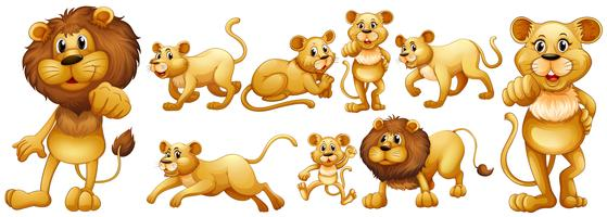 Conjunto de leões selvagens