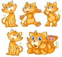 Set di gatti