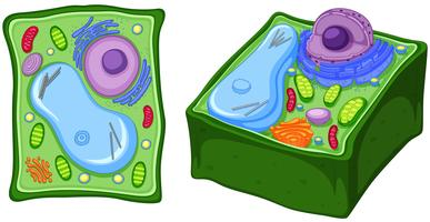Close up diagram of plant cell vector