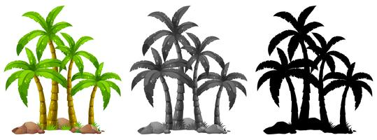 Set of palm tree  vector