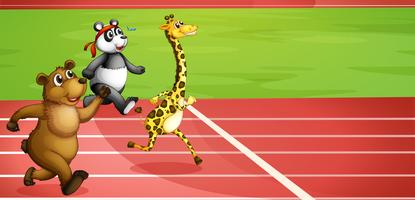 Una maratona animale
