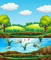 Vissen in de natuur vijver