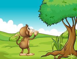 Um macaco olhando para a árvore
