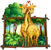 Two giraffes hugging in the jungle