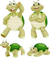 Tortugas vector