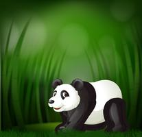 En panda på grön suddig bakgrund