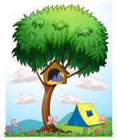 Una cuccia sopra un albero vicino alla tenda
