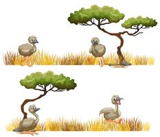Ostriches running in the field