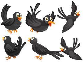 Aves negras vetor