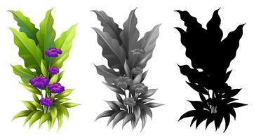 Set der Blumenpflanze