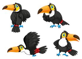 Four toucans in different poses