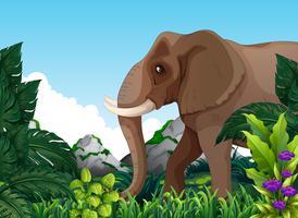 En elefant i skogen