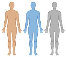 human body free vector art 19 324 free downloads https www vecteezy com vector art 418279 human body outline in three colors