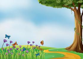Mariposas y una hermosa naturaleza.