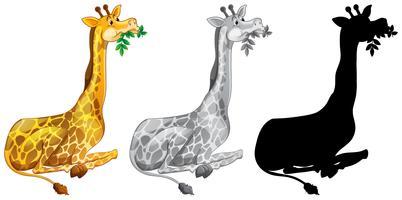 Conjunto de jirafa comiendo
