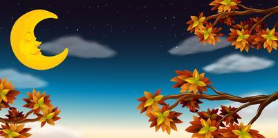 A meia lua