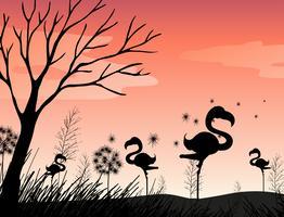 Scène de silhouette avec flamant rose sur le terrain