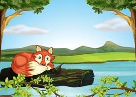 Un animale selvatico nel fiume