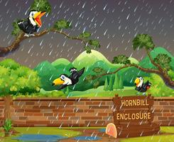 Three hornbill birds in the rain