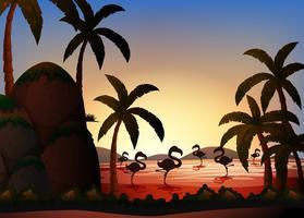 Scène de silhouette avec des oiseaux flamants dans la rivière