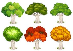 Different shapes of trees vector