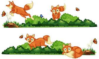 Raposas descansando no campo