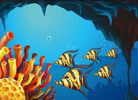 Um grupo de peixes de cor listrada perto dos recifes de coral