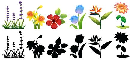 Different types of flowers and silhouette vector