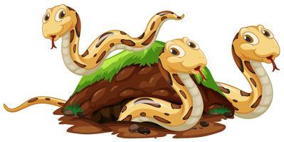 Schlangenfamilie, die unterirdisches Loch lebt