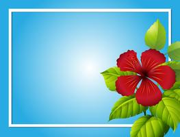 Blue background template with hibiscus flower