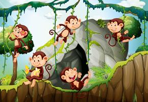 Cinco monos viviendo en el bosque.