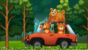 A group of bear travel in the forest by car