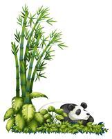 A sleeping panda