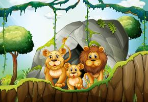 Lion family living in the jungle vector
